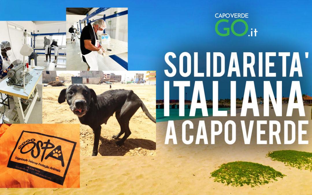 A Capo Verde azienda produce e regala mascherine per Covid-19 e volontari assistono cani di strada   GUARDA IL VIDEO