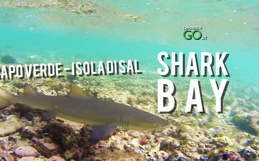 Shark Bay – fai il bagno con gli squali limone di Capo Verde – Isola di Sal | GUARDA IL VIDEO