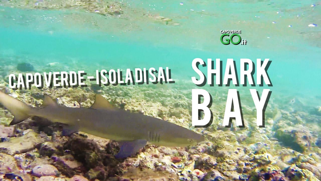 shark bay la baia degli squali - isola di sal - capo verde